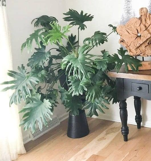 Styling Your Home With Plants